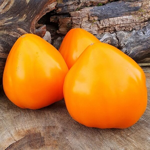 Oranža zemene (Orange Strawberry)